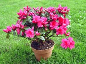flores de invierno para macetas