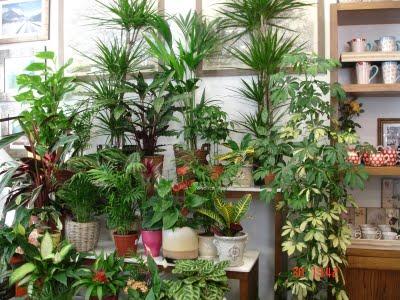 El mundo de las plantas - Cuidados plantas interior ...