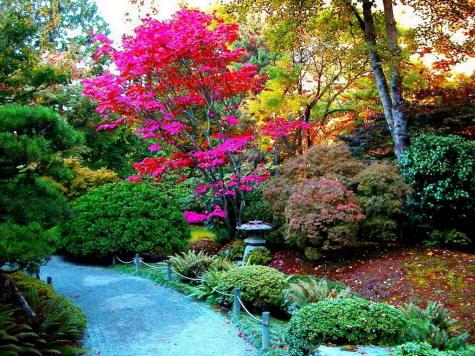 Plantas se comunican con sus parientes taringa - Arboles bonitos para jardin ...
